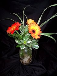 Centerpiece- Orange Gerbera Daisies in Jar