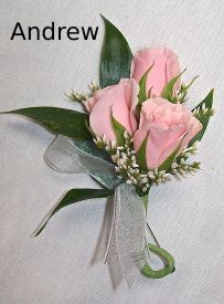 Andrew Boutonniere