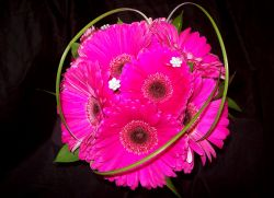Hot Pink Gerbera Daisy Bouquet