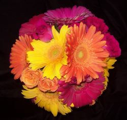 Gerbera Daisies - Hot Pink, Orange, and Yellow